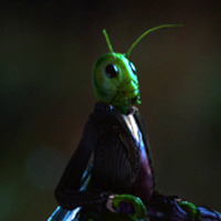 Jiminy Cricket played by Raphael Sbarge