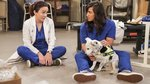 01x09 - Therapy Dogs