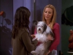 07x08 - The One Where Chandler Doesn't Like Dogs