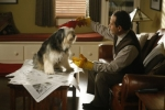 08x11 - Mr. Monk and the Dog
