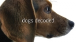 37x14 - Dogs Decoded