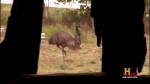 03x07 - The Emu Chase