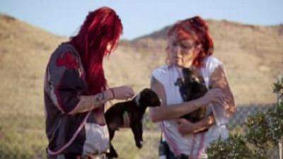 Pit Bulls and Parolees - 03x09 Cut Loose