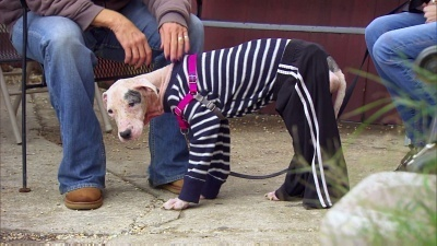 Pit Bulls and Parolees - 08x13 100th Episode: A Long Time Coming