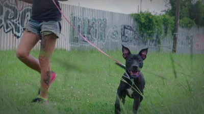 Pit Bulls and Parolees - 11x02 Shelter From The Storm