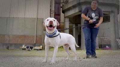 Pit Bulls and Parolees - 13x03 A Family Connection