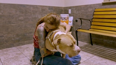 Pit Bulls and Parolees - 14x06 Match Made Perfect