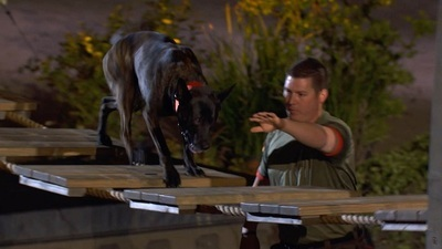 America's Top Dog - 01x06 Country Boys and Rescue Dogs Screenshot