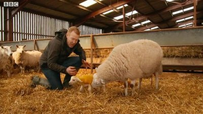 Countryfile (UK) - 32x14 24 Hours in The Lambing Shed