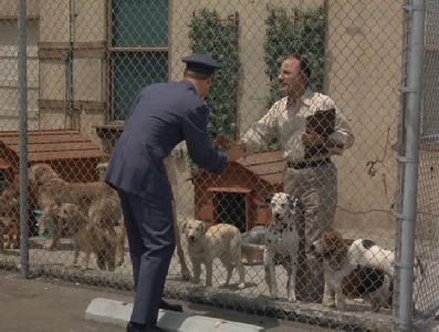 I Dream of Jeannie - 02x06 What's New, Poodle Dog?
