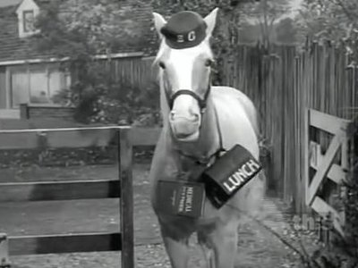 Mister Ed - 06x13 Ed Goes to College Screenshot
