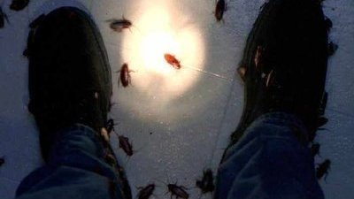 The X-Files - 03x12 War of the Coprophages