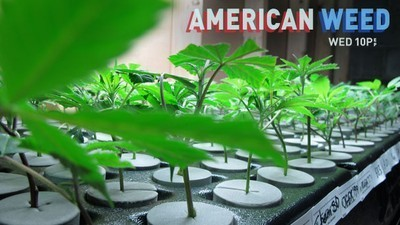 American Weed - 01x09 Mile High Showdown: 4/20 or Bust