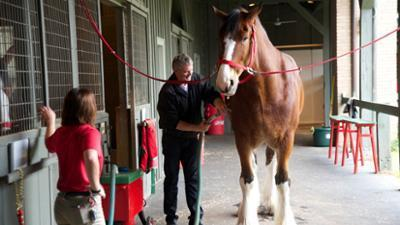 Horsepower With Martin Clunes (UK) - TV Special: Heavy Horse Power Screenshot