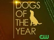 Dogs of the Year TV Series