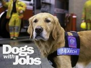Dogs with Jobs TV Series