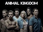 Animal Kingdom TV Show