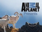 Animal Planet Presents TV Show
