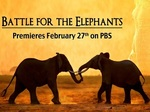 Battle for the Elephants TV Show