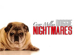 Cesar Millan: Doggie Nightmares TV Show
