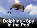 Dolphins – Spy In The Pod (UK) TV Show
