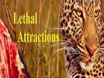Lethal Attractions TV Show