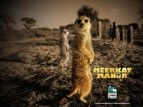 Meerkat Manor TV Show