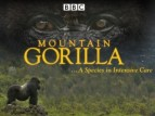 Mountain Gorilla (UK) TV Show