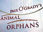 Paul O'Grady's Animal Orphans (UK) TV Show