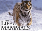 The Life of Mammals (UK) tv show photo