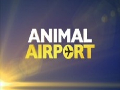 Animal Airport (UK)