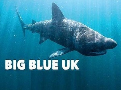 Big Blue UK