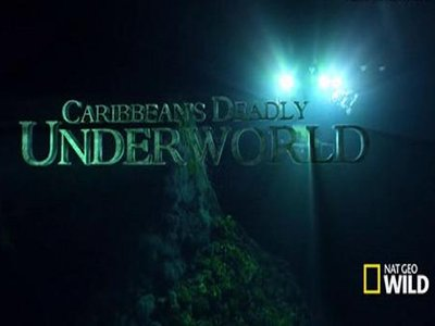 Caribbean's Deadly Underworld