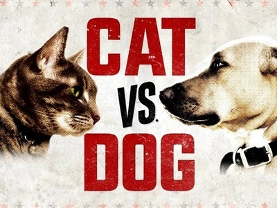 Cat vs. Dog tv show photo