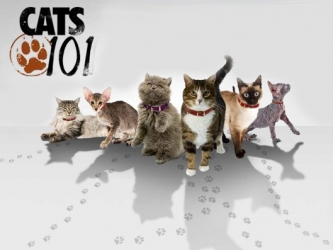 Cats 101 tv show photo