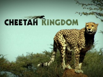 Cheetah Kingdom (UK) tv show photo