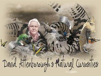 David Attenborough's Natural Curiosities (AU)