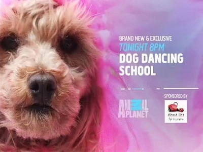 Dog Dancing School (UK) tv show photo