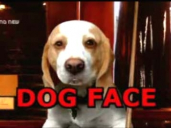 Dog Face tv show photo