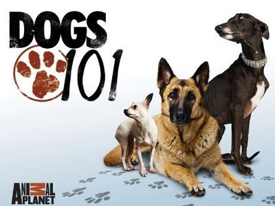 Dogs 101 tv show photo