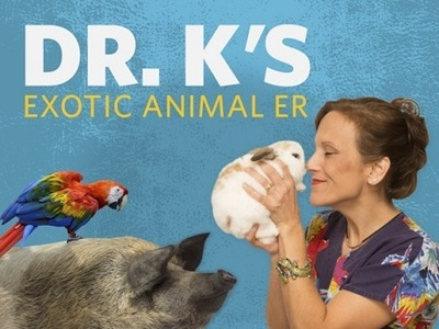Dr. K's Exotic Animal ER