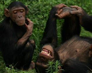 Escape to Chimp Eden tv show photo