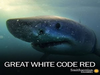 Great White Code Red tv show photo
