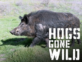 Hogs Gone Wild tv show photo