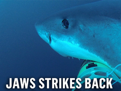 Jaws Strikes Back (CA)