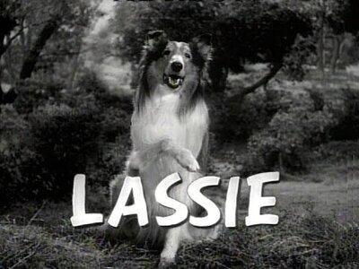 Lassie tv show photo