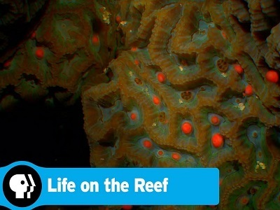 Life on the Reef (AU)