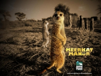 Meerkat Manor tv show photo