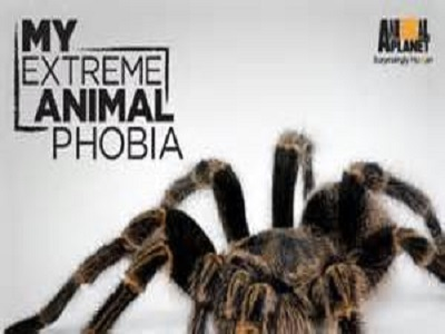 my phobia Get the facts on phobia causes, symptoms, and treatments types of phobias include social phobia, agoraphobia, and specific phobias (claustrophobia, arachnophobia.