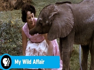 My Wild Affair